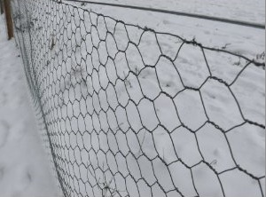 chicken wire 2